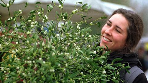 Das Archivbild vom 04.12.2000 zeigt Stefanie, die sich einen Mistelzweig aussucht. Die immergrüne Pflanze mit den weißen Beeren ist seit Jahrhunderten ein Kultobjekt. Auch Mediziner schätzen die Heilkraft der kugeligen Sträucher, deren Wirkstoffe beispielsweise in der Krebsbehandlung Anwendung finden.