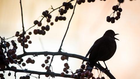 Vogel sitzt auf Ast und singt