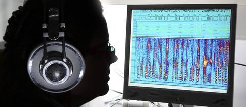 Grafische Darstellung von Sprach-Tonaufnahmen. Vergleich von Sprache und Sprechern.