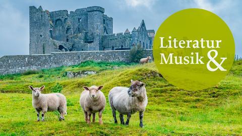Aufbruch - Reisen im Kopf: Irland