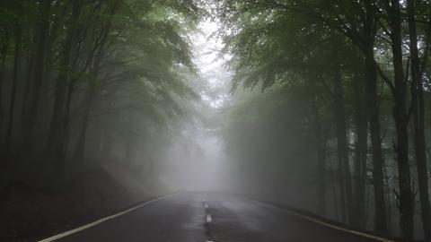 Straße im Wald, die im Nebel verschwindet
