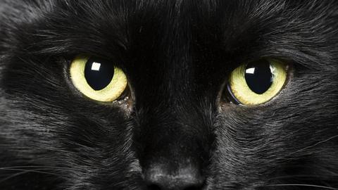 Symbol für Aberglaube: Schwarze Katze