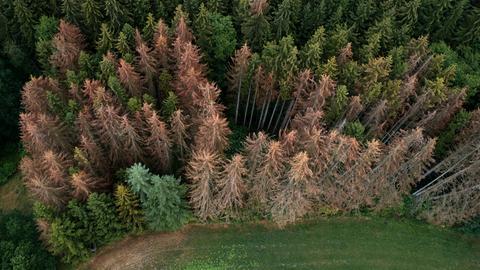 11.07.2019, Rheinland-Pfalz, Koblenz: Die Luftaufnahme mit einer Drohne zeigt geschädigte Fichten im rechtsrheinischen Stadtwald von Koblenz. Dürre, Hitze und Schädlinge bringen nicht nur Nadel-, sondern zunehmend auch Laubbäumenden Tod.
