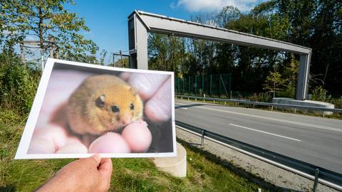 Bayern, Vilshofen: Das Foto einer Haselmaus vor der Haselmausbrücke, die über die Ortsumgehung führt. Die streng geschützte Haselmaus sorgt im niederbayerischen Vilshofen seit zwei Jahren für Gesprächsstoff: Damit die putzigen Tierchen eine neu gebaute Umgehungsstraße sicher überqueren können, hat ihnen das Staatliche Bauamt im Herbst 2018 eigens eine Brücke für 93 000 Euro errichtet. Das sorgte für Spott und Unverständnis in der Bevölkerung und ein Jahr später für einen Eintrag im Schwarzbuch der Steuerzahler.
