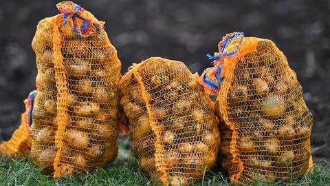 Kartoffelernte im Herbst