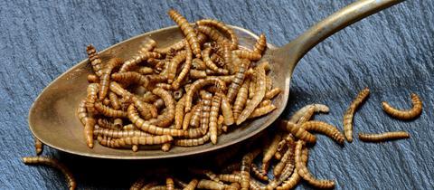 Mehlwürmer in Esslöffel