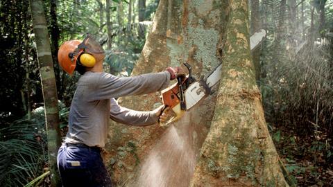 Ein Waldarbeiter sägt im Jahr 2008 einen Baum im Regenwald des Amazonas um. Die Abholzung des Regenwalds sorgt für weniger Niederschlag und macht die Tropen somit trockener.