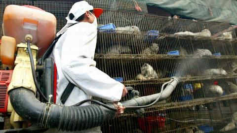 Ein Arbeiter desinfiziert auf einem Wildtiermarkt Käfige mit Schleichkatzen.