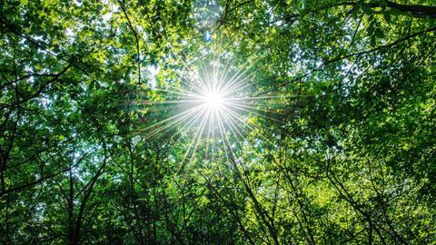 Baumkronen, durch die Sonne scheint