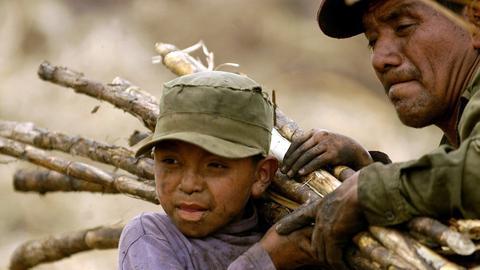 Kleiner, von der Arbeit verschmutzter Junge trägt Zuckerrohrstangen auf seiner Schulter, sein Vater hilft ihm dabei.