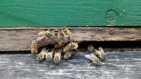 Neues Museum für Bienen Frankfurt