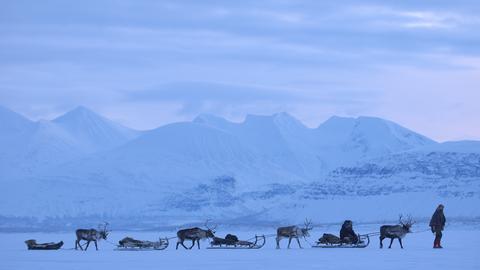 Rentier-Schlitten in Lappland