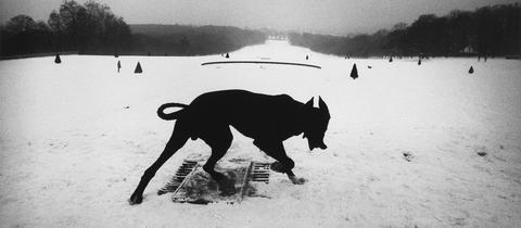 Josef Koudelka: Parc de Sceaux, France, 1987