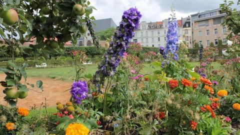 Im Prinz-Georg-Garten wachsen Obst und Gemüse zwischen den Blumen