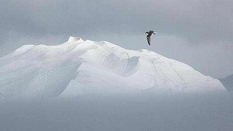 Ulrike Crespo: Grönland
