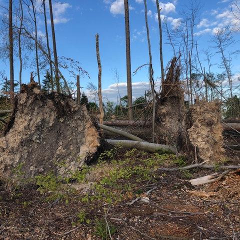 Der deutsche Wald leidet stark unter Trockenheit und Hitze