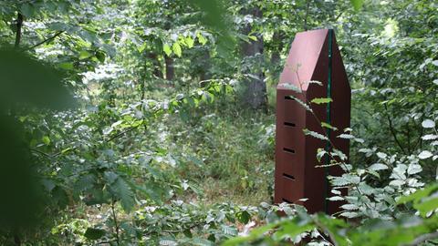 Warzenbeißer Kunstweg im Nationalpark Kellerwald-Edersee